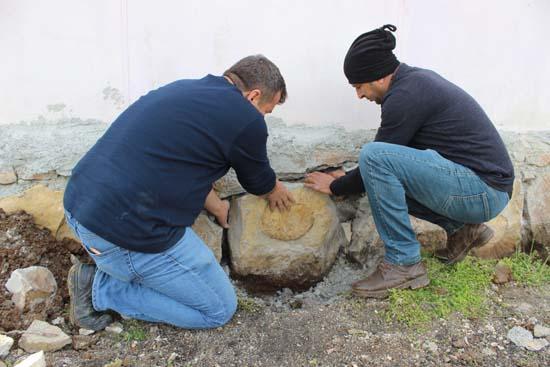 65 milyon yıllık dev fosil duvardan söküldü