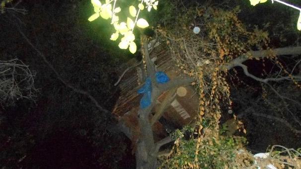 Ağaç evde yakalandı!